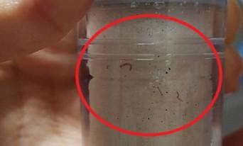 인천 서구 수돗물, 이번에 유충으로 주민 불안 확산